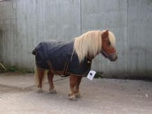 Bucas Irish Pony Turnout Light (For Shetland Ponies and Small Ponies)